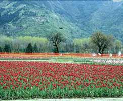 Jammu Vacation